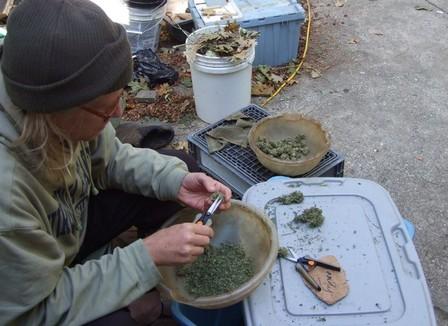 romain-part-3-semaines-en-californie-pour-travailler-dans-une-ferme-a-cannabis